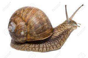 4935730-Funny-escargot-sur-un-fond-blanc-Banque-d'images